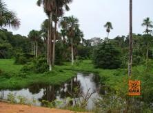 expedicao-amazonia-12