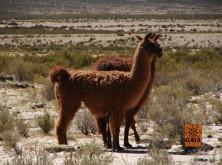 expedicao-deserto-atacama-25-1024×768