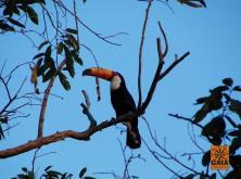 expedicao-pantanal-03
