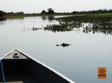 expedicao-pantanal-05