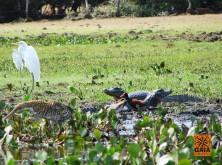 expedicao-pantanal-06