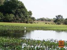 expedicao-pantanal-08