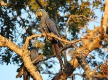 expedicao-pantanal-15