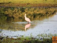 expedicao-pantanal-27