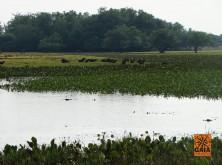 expedicao-pantanal-30