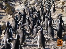 expedicao-patagonia-13