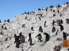 expedicao-patagonia-3