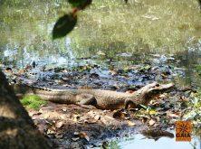 expedicao-pantanal-02