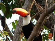 expedicao-pantanal-11