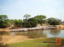 expedicao-pantanal-28