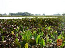 expedicao-pantanal-31