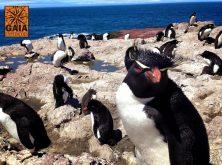 expedicao-gaia-patagonia-carretera-austral (8)