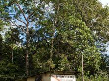 006_PN_Amazonia