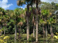 013_PN_Amazonia