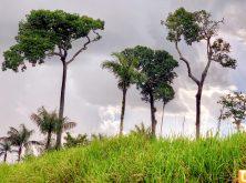 017_PN_Amazonia
