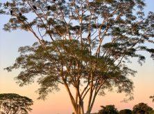 114_Overlander_Gaia_Pantanal-1