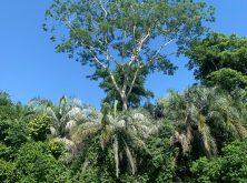 136_Overlander_Gaia_Pantanal-1