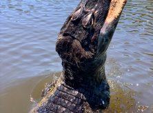 172_Overlander_Gaia_Pantanal-1