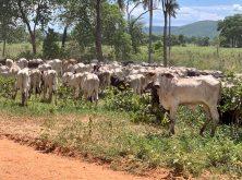 205_Overlander_Gaia_Pantanal