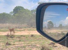 231_Overlander_Gaia_Pantanal