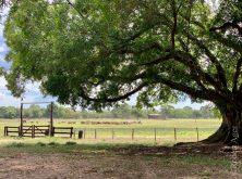 292_Overlander_Gaia_Pantanal