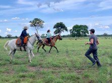 297_Overlander_Gaia_Pantanal