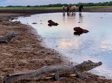 309_Overlander_Gaia_Pantanal