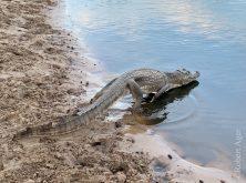 311_Overlander_Gaia_Pantanal
