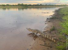 349_Overlander_Gaia_Pantanal