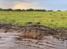 354_Overlander_Gaia_Pantanal