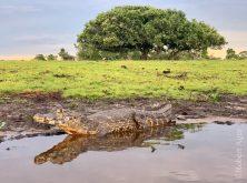 361_Overlander_Gaia_Pantanal